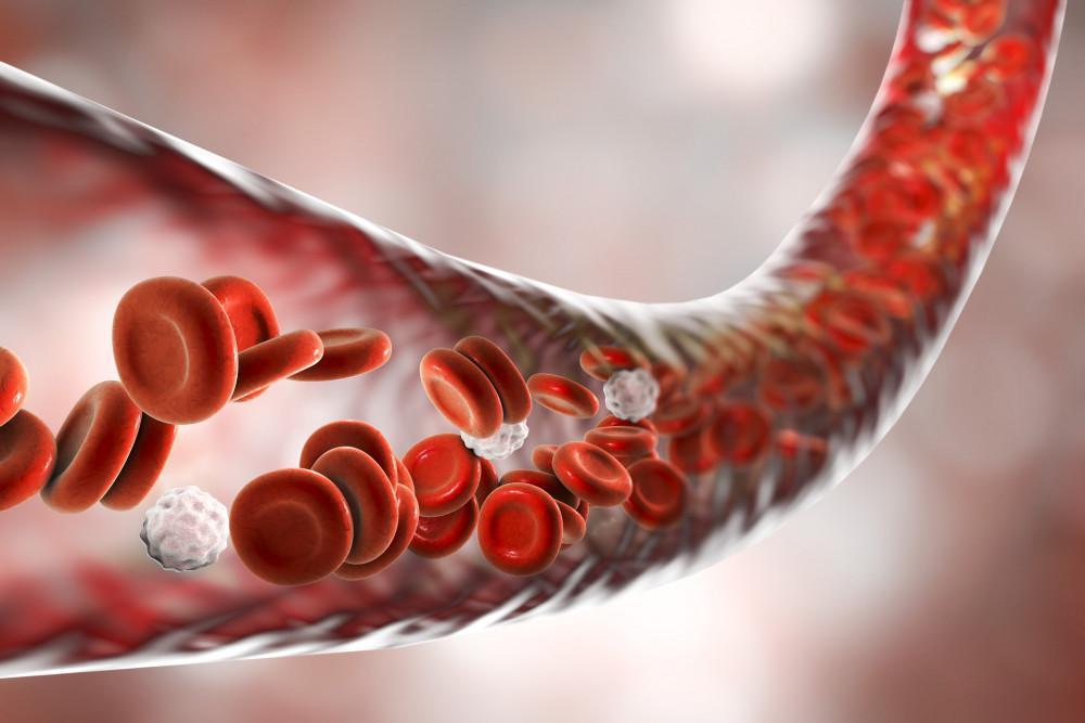 illustration of blood cells in vein